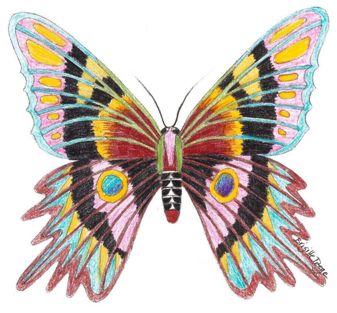Malvorlage Leicht Schmetterling