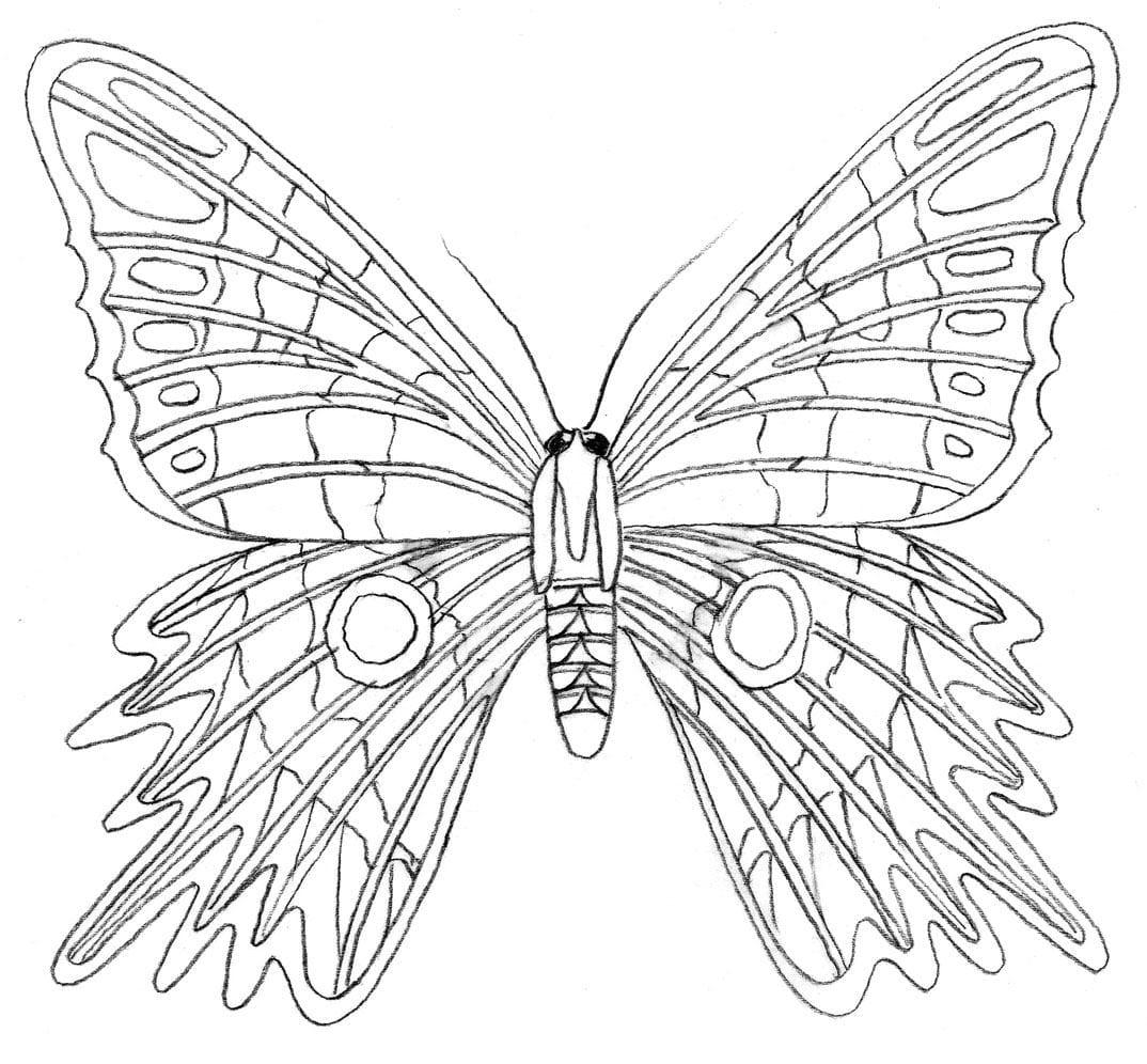 Ausmalbilder Schmetterling Zum Drucken : Elegante Ausmalbilder Kostenlos Schmetterling