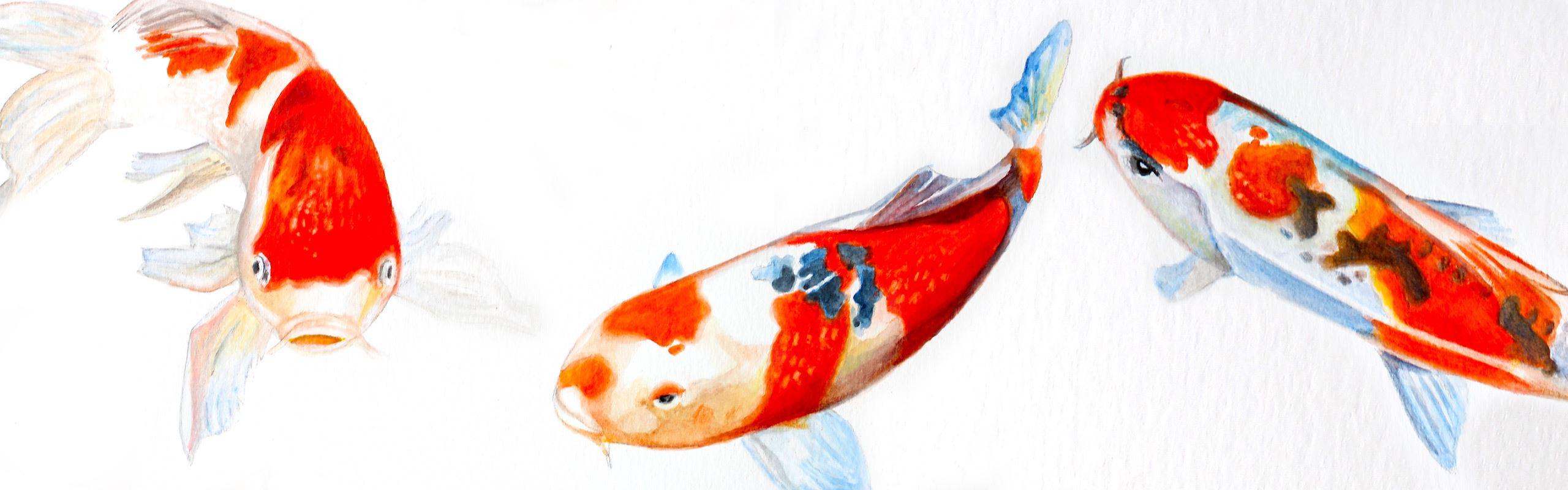 So malen Sie Koi Fische mit dem Albrecht Dürer Magnus aus