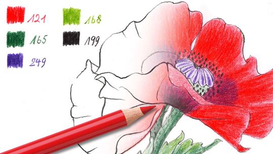 Colouring pages (advanced): Red poppy